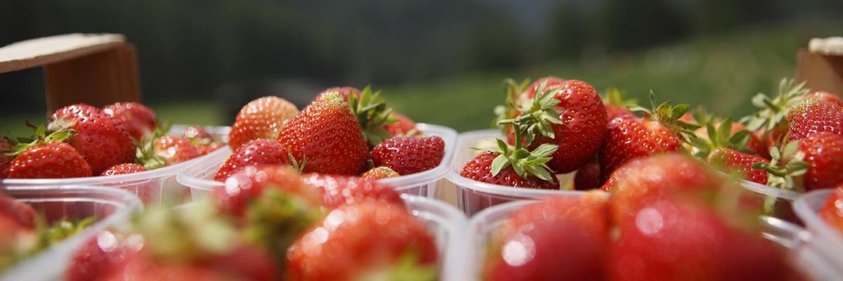 wo kann man erdbeeren und himbeeren kaufen egma obstversteigerung. Black Bedroom Furniture Sets. Home Design Ideas